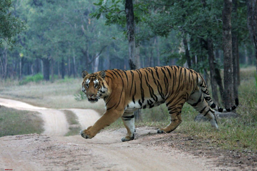 Tour Kanha tiger reserve India, WildlifeTour India