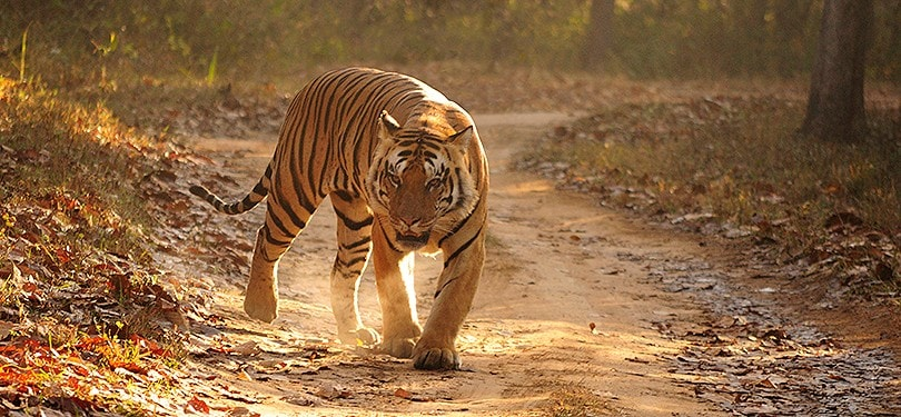 BANDHAVGARH-NATIONAL-PARK-MP-tourism