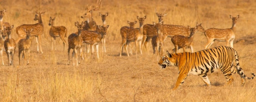 PENCH-NATIONAL-PARK-MP-Tourism